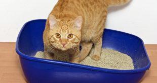 بنتونيت خاک گربه